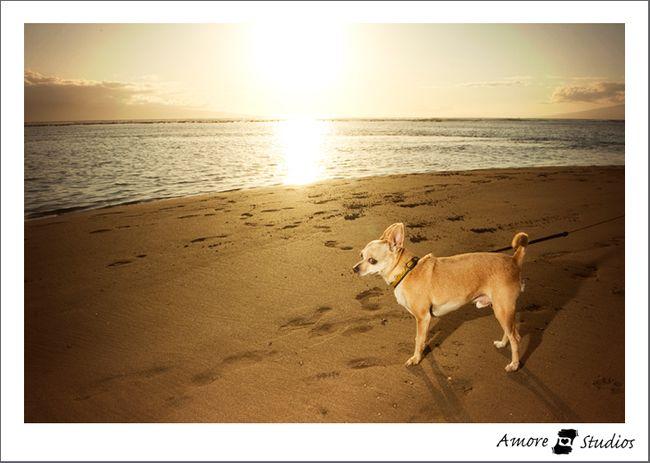 Hawaii-2010-15