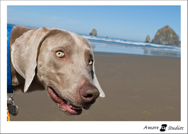 Cannonbeach0908_002